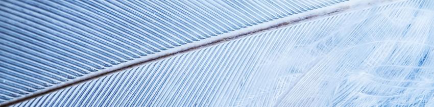 Banniere-Interieure-Poids efficium genève